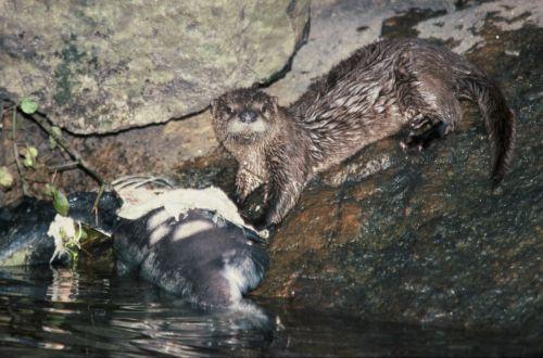 salmonriver2003-07